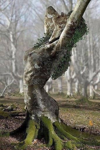 albero pianta