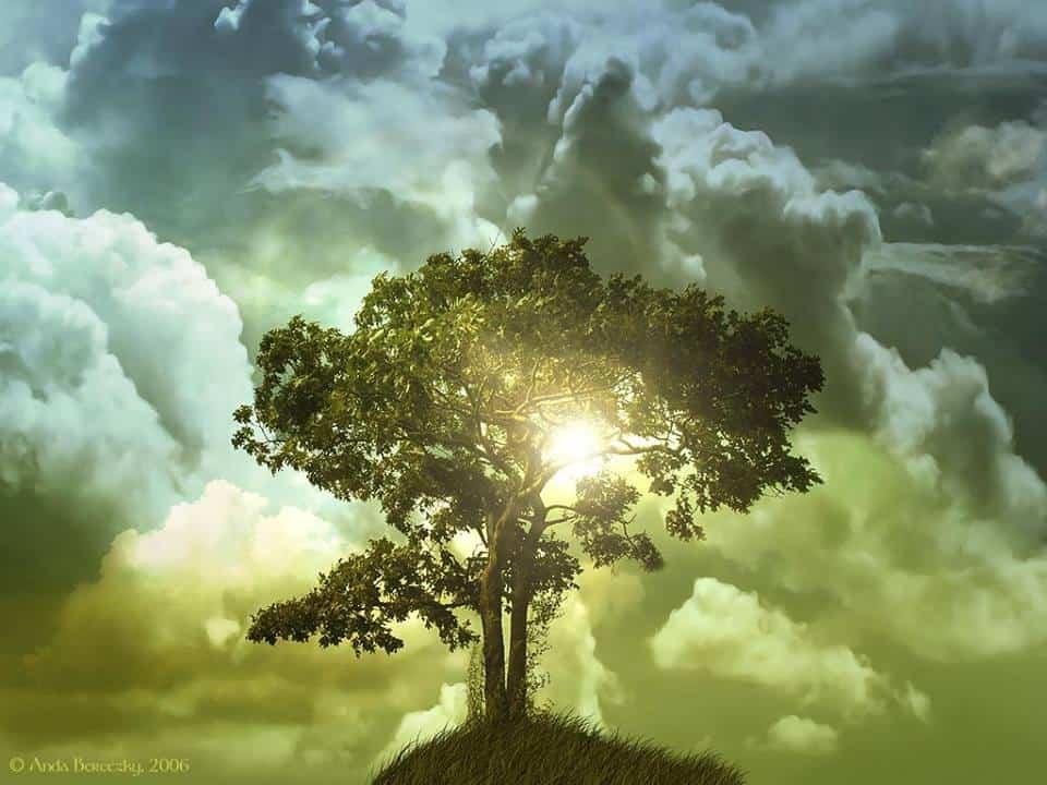 albero davanti al cielo