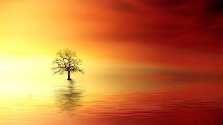 energia-cosciente-immortale